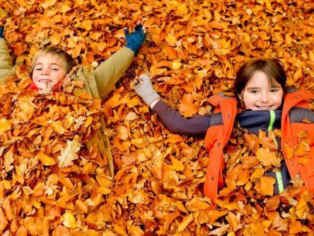 Стало відомо, коли розпочнуться осінні канікули у школах Чернігова